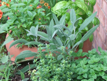 Tip Tuesday - Portable Kitchen Herb Garden