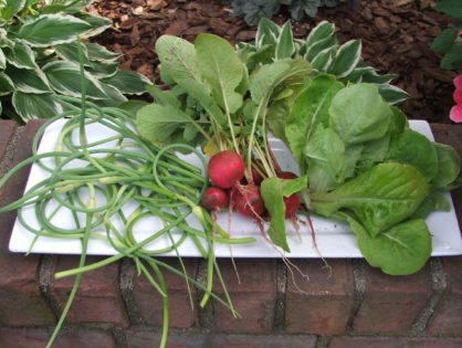 Tip Tuesday - Garlic Scapes