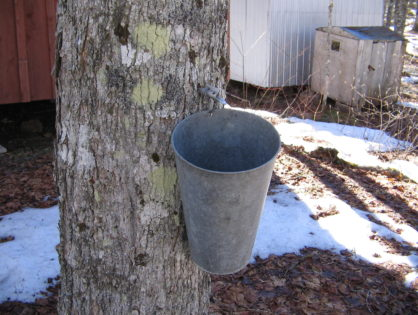 Kentucky Maple Syrup